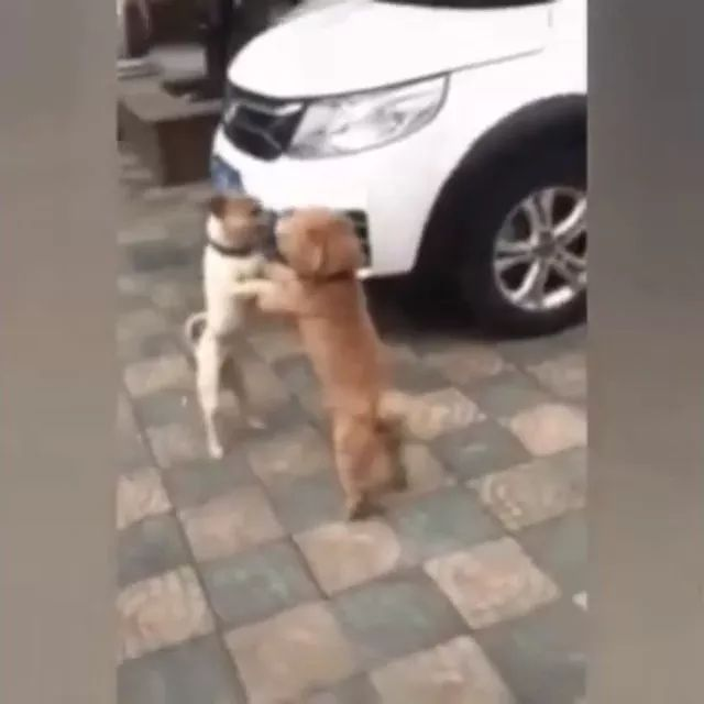 Two dogs shaking hands on the street