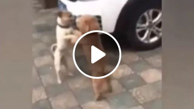Two Dogs Shaking Hands On The Street - Video & GIFs   dogs, friendly, adorable, handshake, street, luxury car, luxury vehicle